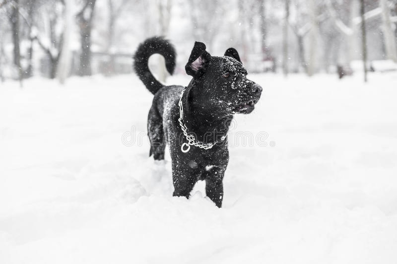 Σκυλί στο χειμερινό χιόνι στοκ εικόνα με δικαίωμα ελεύθερης χρήσης