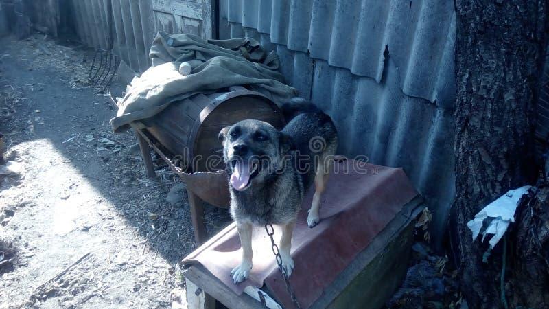 Σκυλί στο χωριό στοκ φωτογραφίες με δικαίωμα ελεύθερης χρήσης
