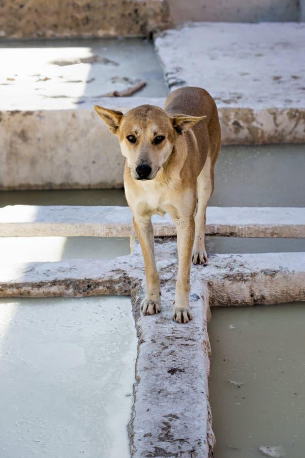 Σκυλί στο medina Μαρόκο φλοιών στοκ εικόνες με δικαίωμα ελεύθερης χρήσης
