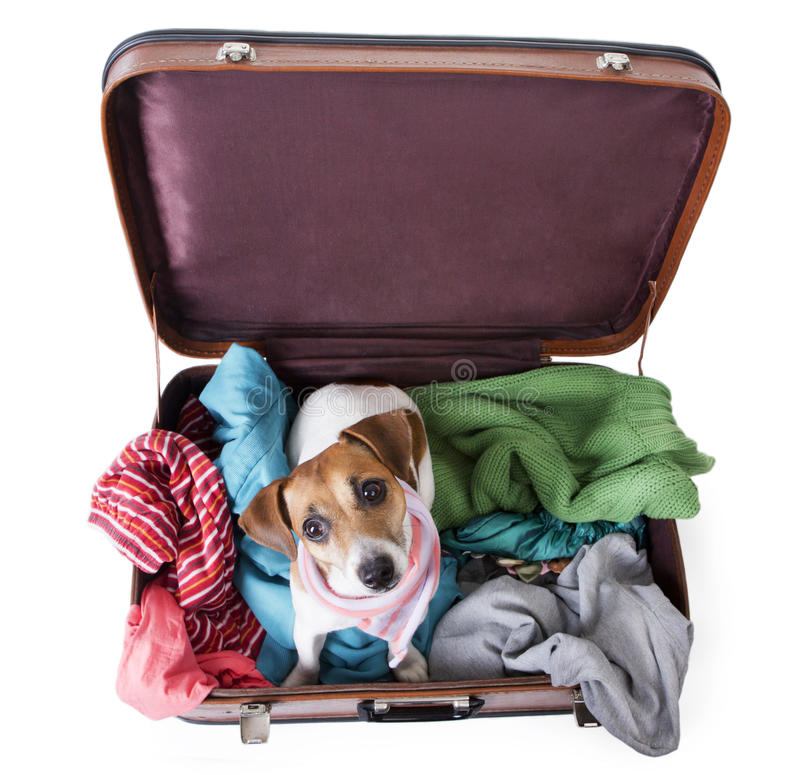 Σκυλί στο sutecase στοκ εικόνες