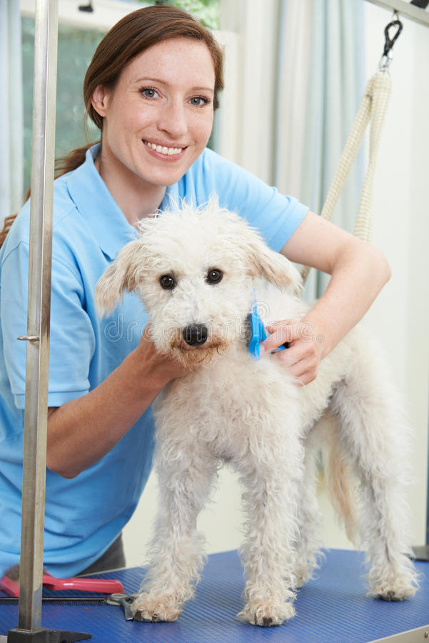 Σκυλί της Pet επαγγελματικά που καλλωπίζεται στο σαλόνι στοκ φωτογραφίες με δικαίωμα ελεύθερης χρήσης