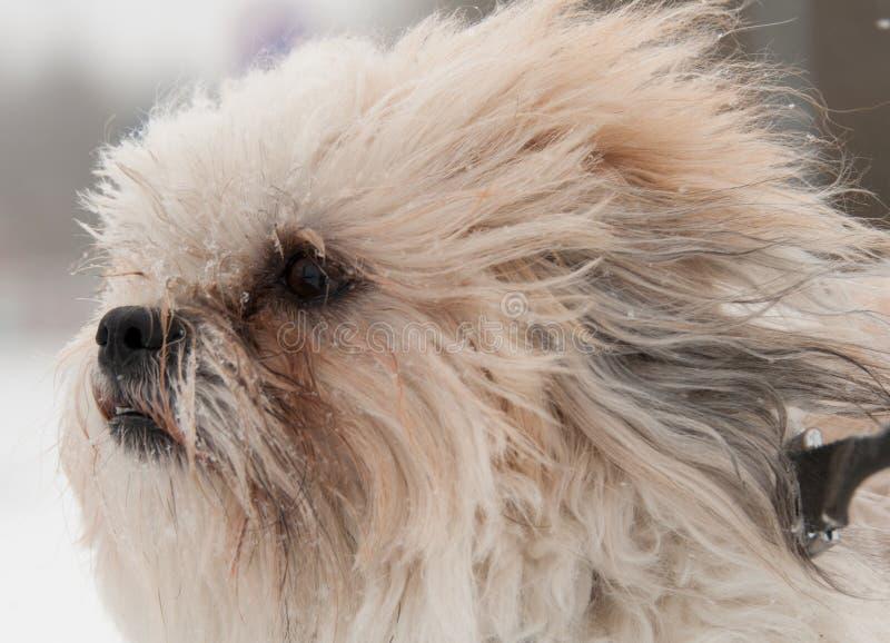 Σκυλί το χειμώνα στοκ φωτογραφία με δικαίωμα ελεύθερης χρήσης