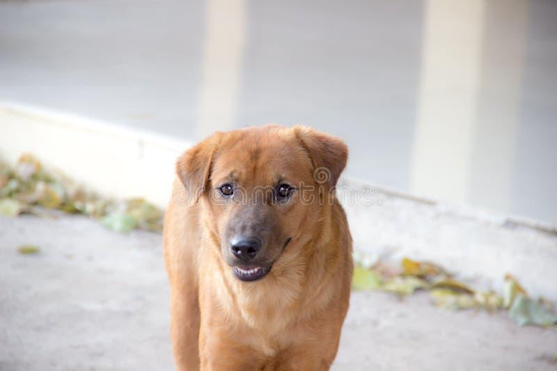 Σκυλί των vagrant στοκ εικόνες