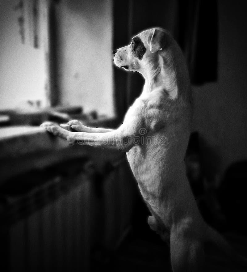 Σκυλί, φίλος στοκ φωτογραφία