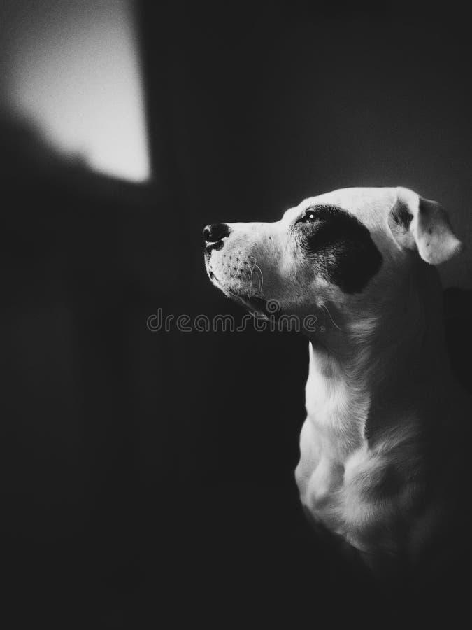 Σκυλί, φίλος στοκ φωτογραφίες