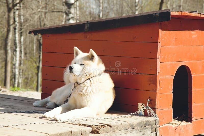 Σκυλί φρουράς στοκ φωτογραφία