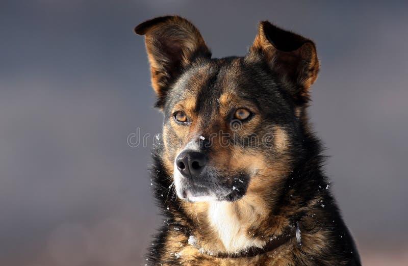 Download Σκυλί στοκ εικόνα. εικόνα από κλείστε, λεπτομέρειες, πορτρέτο - 13178101
