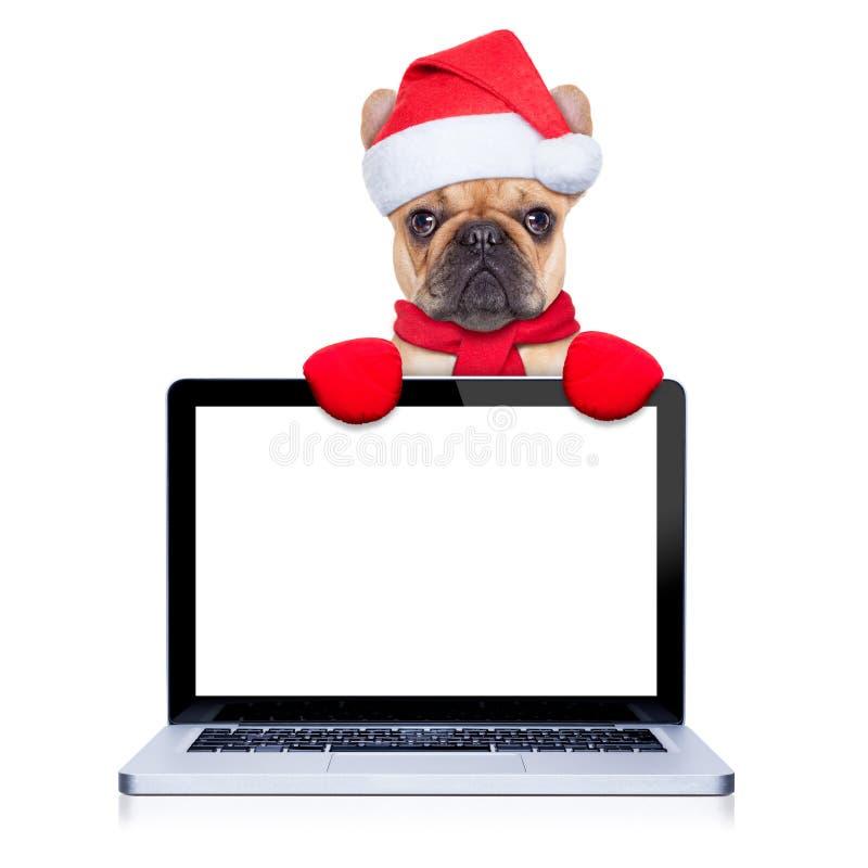 Σκυλί Christams στοκ εικόνες με δικαίωμα ελεύθερης χρήσης