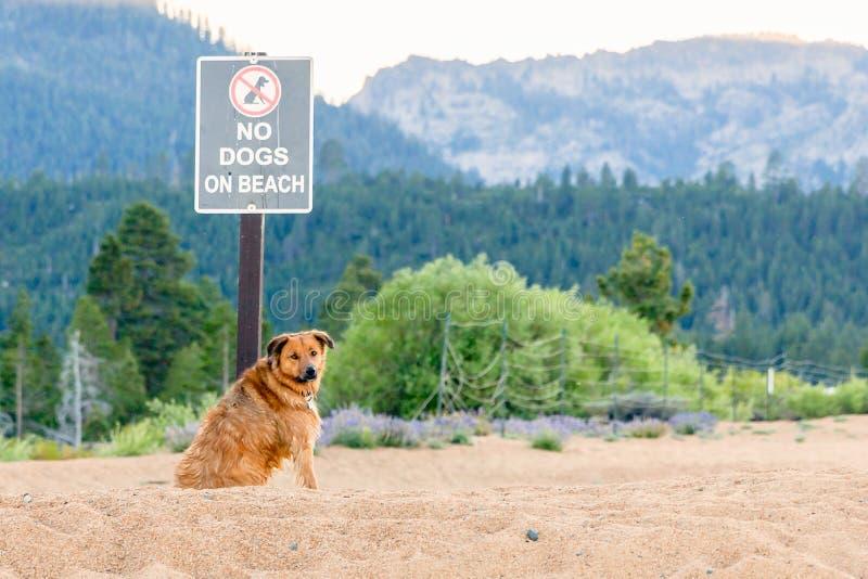 Σκυλί Disobeys κανένα σκυλί που επιτρέπεται το σημάδι στοκ εικόνα