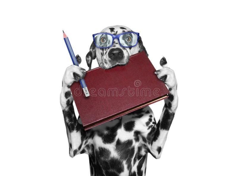Σκυλί eyeglasses που κρατούν ένα βιβλίο στο στόμα του και ένα μολύβι στοκ φωτογραφία με δικαίωμα ελεύθερης χρήσης