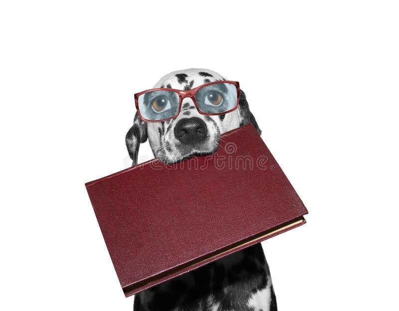 Σκυλί eyeglasses που κρατούν ένα βιβλίο στο στόμα του στοκ φωτογραφία με δικαίωμα ελεύθερης χρήσης