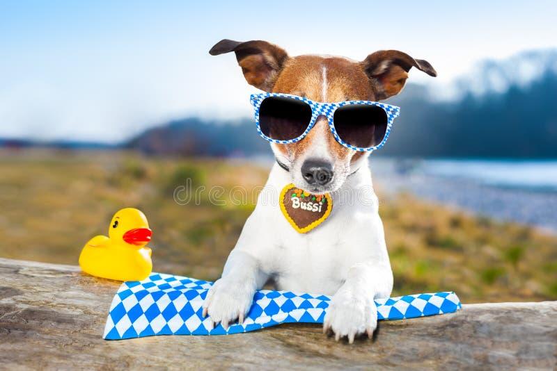 Σκυλί Oktoberfest στοκ φωτογραφία