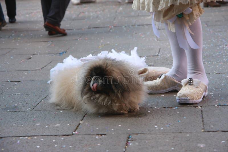 Σκυλί Pekingese στη Βενετία καρναβάλι στην Ιταλία στοκ φωτογραφία με δικαίωμα ελεύθερης χρήσης