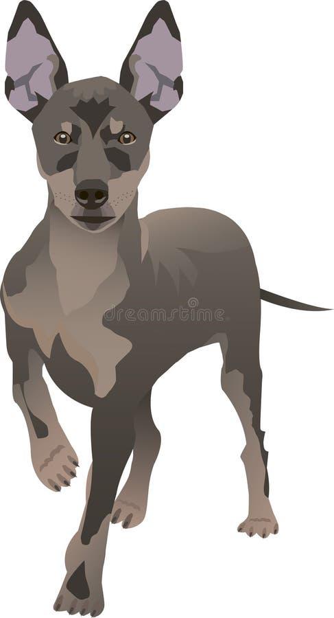 Σκυλί Pincher στοκ εικόνα με δικαίωμα ελεύθερης χρήσης