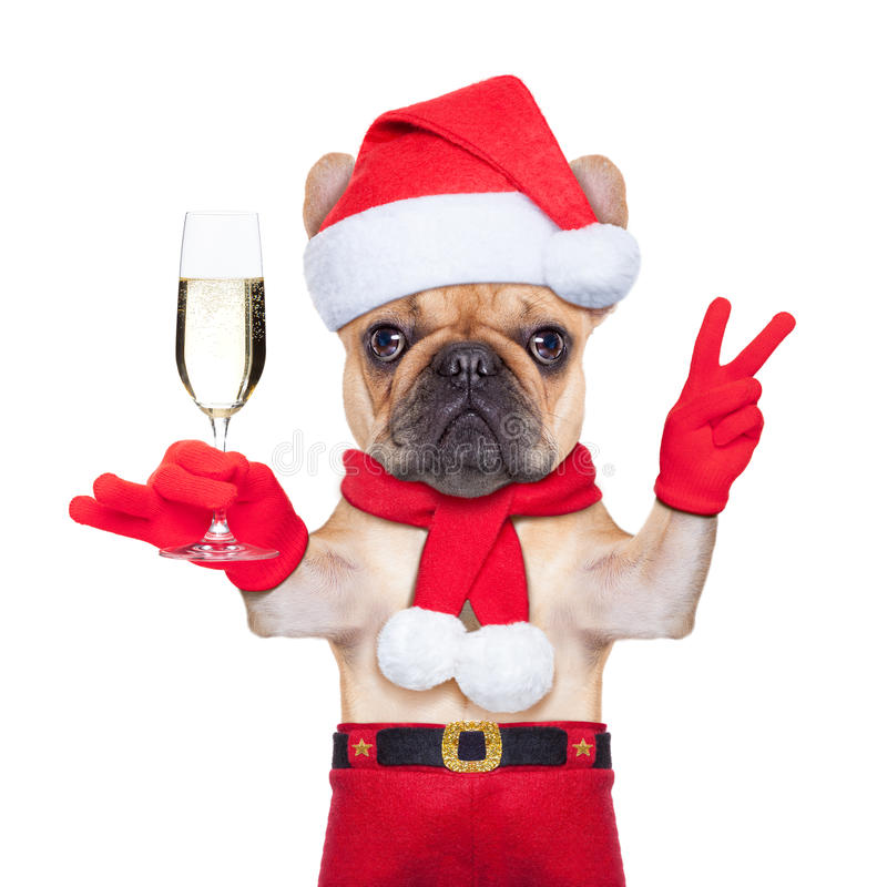 Σκυλί Santa στοκ φωτογραφία