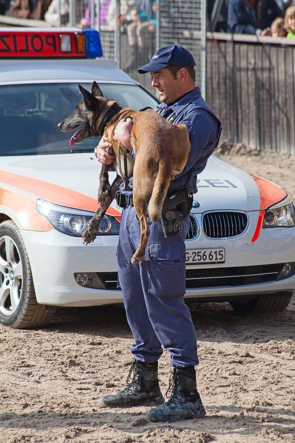 Σκυλιά αστυνομίας στην εργασία στοκ εικόνα