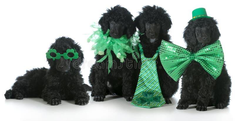 Σκυλιά ημέρας του ST Patricks στοκ εικόνες με δικαίωμα ελεύθερης χρήσης