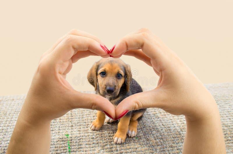 σκυλιά ι αγάπη στοκ φωτογραφίες με δικαίωμα ελεύθερης χρήσης