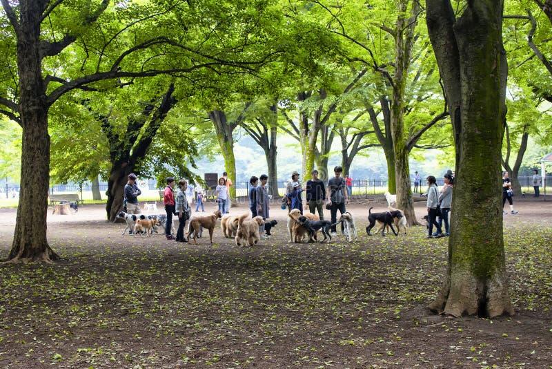 Σκυλιά και ιδιοκτήτες στοκ φωτογραφία με δικαίωμα ελεύθερης χρήσης