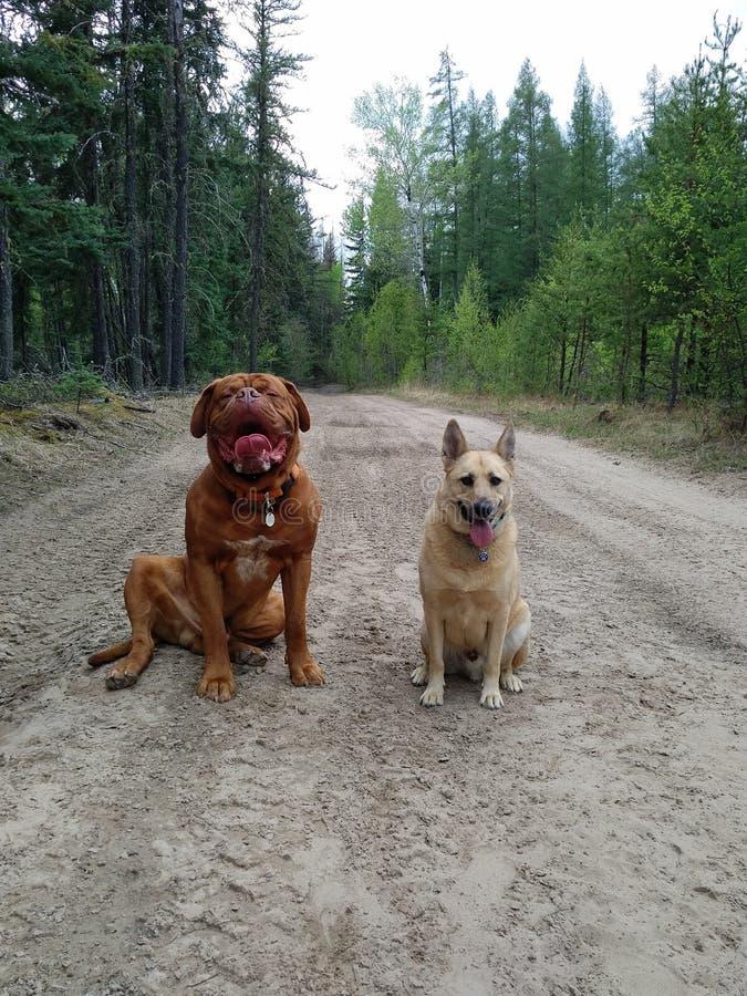 Σκυλιά που κάθονται στο ίχνος στοκ εικόνες με δικαίωμα ελεύθερης χρήσης