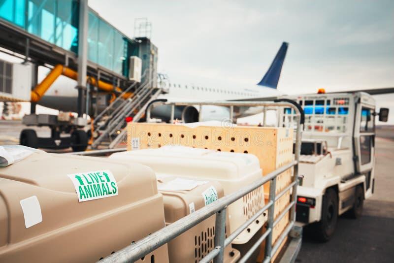 Σκυλιά που ταξιδεύουν με το αεροπλάνο στοκ εικόνα με δικαίωμα ελεύθερης χρήσης
