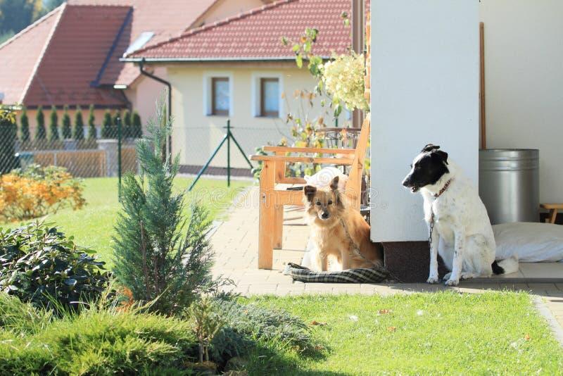 Σκυλιά που φρουρούν το σπίτι στοκ εικόνα με δικαίωμα ελεύθερης χρήσης