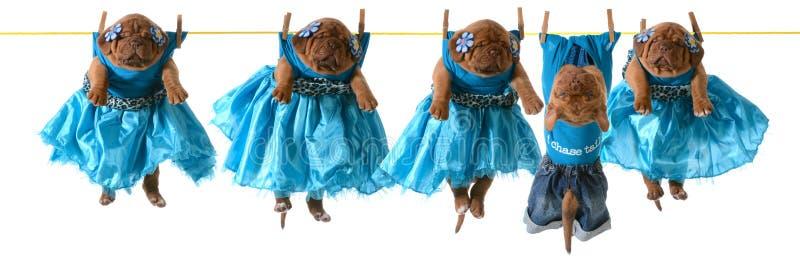 Σκυλιά σε μια σκοινί για άπλωμα στοκ εικόνα
