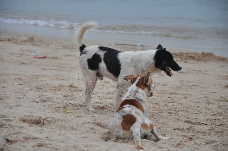 Σκυλιά στην ηλιόλουστη παραλία στοκ φωτογραφίες