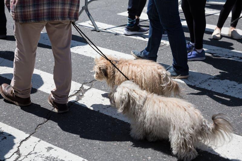 Σκυλιά στις οδούς NYC στοκ εικόνα με δικαίωμα ελεύθερης χρήσης