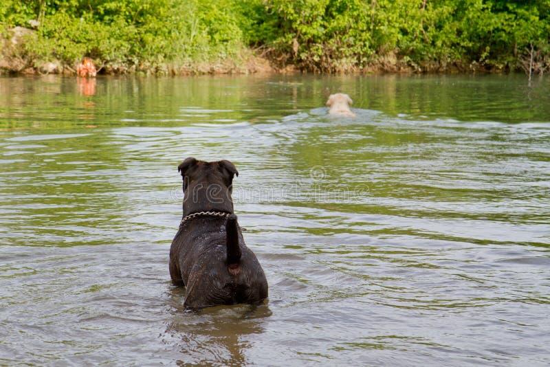 Σκυλιά στο νερό στοκ εικόνες