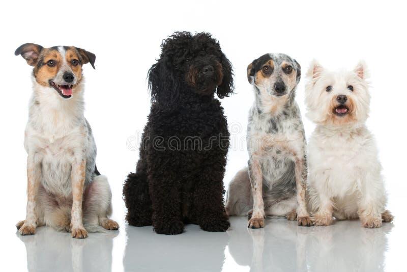 σκυλιά τέσσερα στοκ φωτογραφίες με δικαίωμα ελεύθερης χρήσης