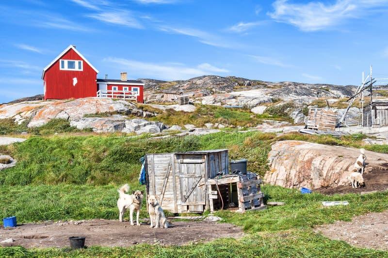 Σκυλιά της Γροιλανδίας που στηρίζονται στην τακτοποίηση Rodebay, Γροιλανδία στοκ φωτογραφία με δικαίωμα ελεύθερης χρήσης
