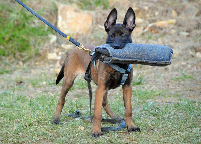 Σκυλιά 106 στοκ φωτογραφίες
