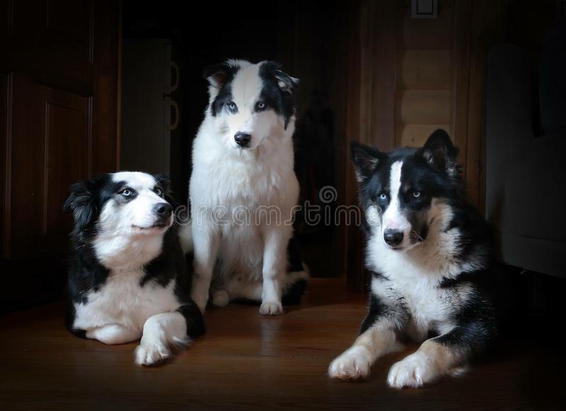 σκυλιά portret στοκ φωτογραφία