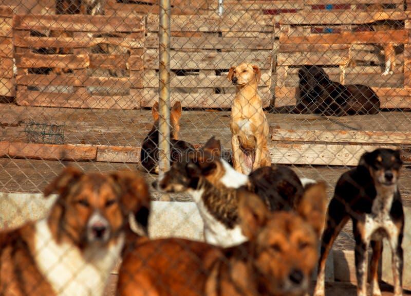 Σκυλιά selter πολλά στοκ φωτογραφία