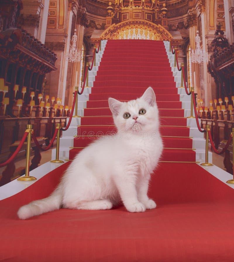 Σκωτσέζικα γατάκια που παίζουν στο κάστρο στοκ εικόνες