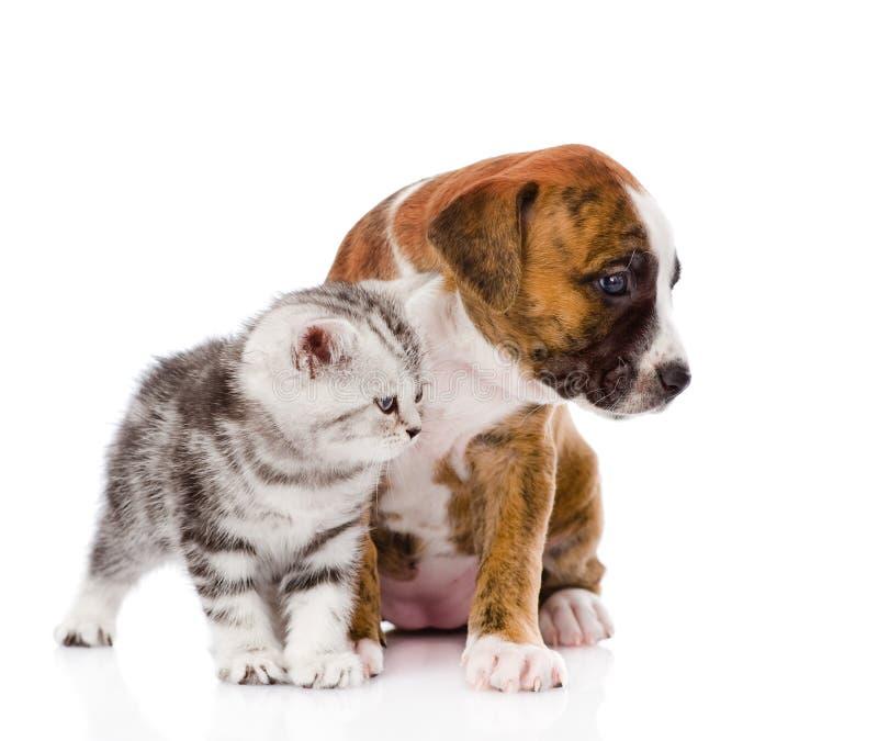 Σκωτσέζικα γατάκι και κουτάβι που κοιτάζουν μακριά Στο λευκό στοκ φωτογραφίες