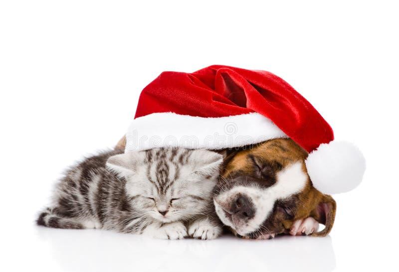 Σκωτσέζικα γατάκι και κουτάβι ύπνου με το καπέλο santa Απομονωμένος στο λευκό στοκ εικόνες με δικαίωμα ελεύθερης χρήσης