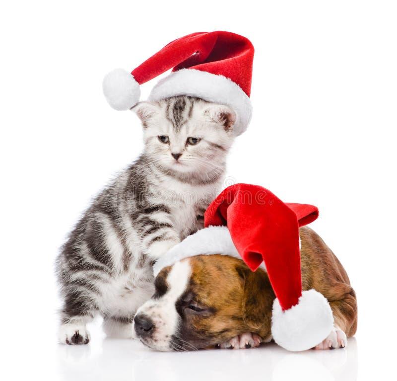 Σκωτσέζικα γατάκι και κουτάβι ύπνου με το καπέλο santa απομονωμένος στοκ εικόνες με δικαίωμα ελεύθερης χρήσης