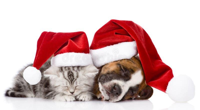 Σκωτσέζικα γατάκι και κουτάβι ύπνου με το καπέλο santa απομονωμένος στοκ εικόνα