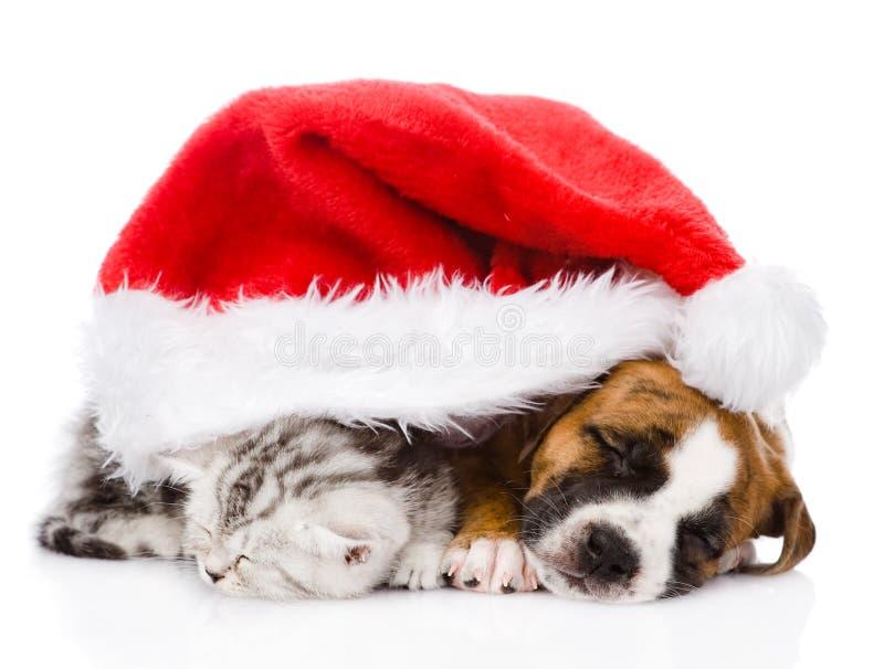Σκωτσέζικα γατάκι και κουτάβι ύπνου με το καπέλο santa απομονωμένος στοκ εικόνα με δικαίωμα ελεύθερης χρήσης