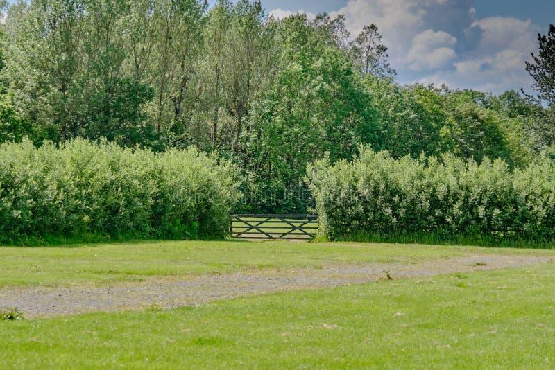 Σκωτσέζικος ώριμος φράκτης και μια ενιαία πύλη στο κέντρο της εικόνας στα πάρκα Scotlands το καλοκαίρι στοκ φωτογραφία με δικαίωμα ελεύθερης χρήσης