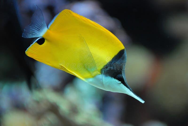 σκόπελος ψαριών κοραλλιών στοκ φωτογραφίες με δικαίωμα ελεύθερης χρήσης