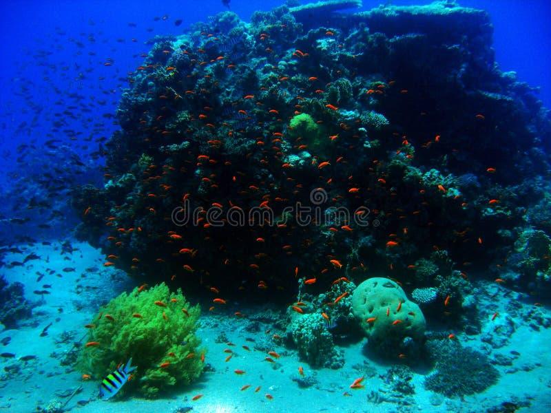 Σκόπελος Goldfish στοκ φωτογραφίες με δικαίωμα ελεύθερης χρήσης