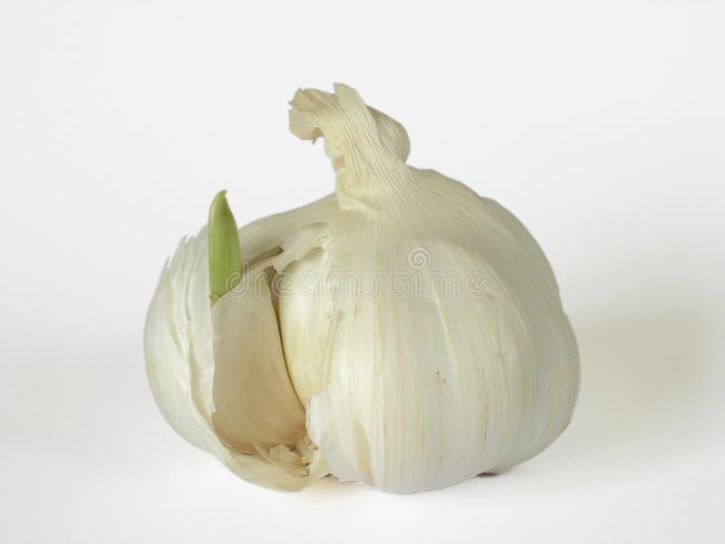 Download σκόρδο βολβών στοκ εικόνα. εικόνα από σκόρδο, τρόφιμα, μαγείρεμα - 58495