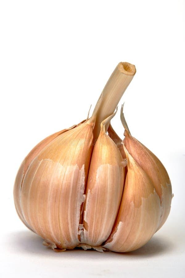Σκόρδο στο λευκό στοκ εικόνα