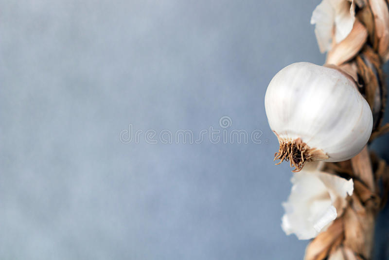 Σκόρδο Σειρά της κινηματογράφησης σε πρώτο πλάνο σκόρδου στοκ εικόνα με δικαίωμα ελεύθερης χρήσης