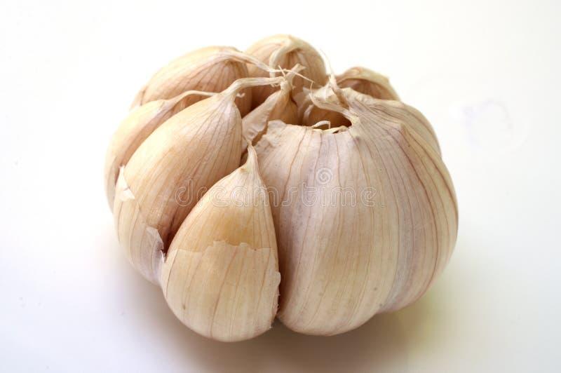 Σκόρδο στην άσπρη ανασκόπηση στοκ φωτογραφία με δικαίωμα ελεύθερης χρήσης