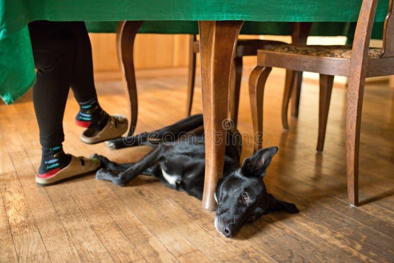 Σκύλος στοκ εικόνα με δικαίωμα ελεύθερης χρήσης