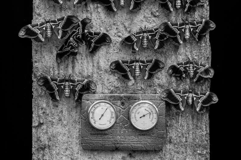 Σκώροι που κρεμούν έξω σε έναν τοίχο γραπτό στοκ φωτογραφία